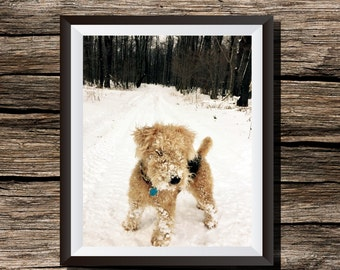Lakeland Terrier Digital Photo Print Wall Art Home Decor Outdoor Woodland Snow Winter Dog Animal Photography Instant Download