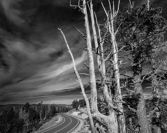Road in Bryce Canyon