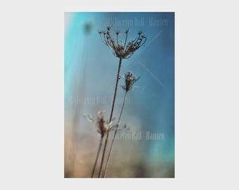 Dried Queen Anne Lace Photo, Soft Turquoise Blue Background, Archival Photo Print, Grainy Fine Art Photography, Dead Wild Flowers, Wall Art