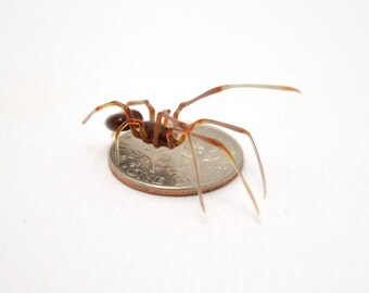 Tiny Thumbnail Spider - lampworked lifelike glass arachnid spider figurine made by Glass Artist Wesley Fleming