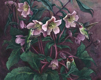 Fine Art Print of Original Watercolor Painting - Hellebore Hummingbirds
