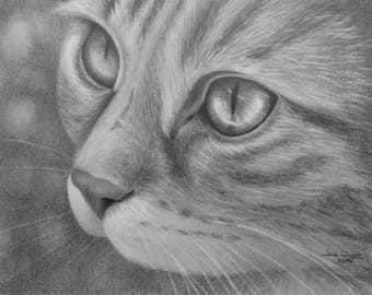 """Cat Eyes 2 - Graphite Pencil Drawing - 5"""" x 7"""" Sketch"""