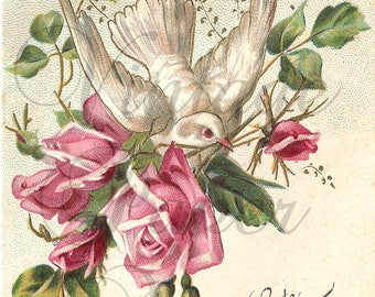 Dove Bird with Pink Roses Antique French Postcard Illustration Embossed Chromo Post Card from Vintage Paper Attic