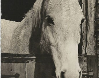 Home's Best - Vintage 1950s Stabled Grey Horse Real Photo Postcard