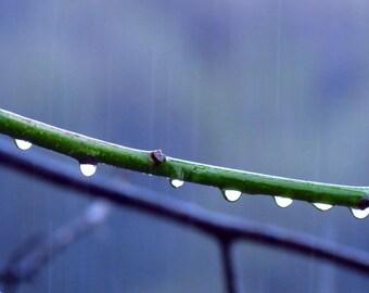 Raindrops by Catherine Roché, Autumn Nature Photography, Raindrops Photography, Rain Photography, Minimalist Photography, Fine Art