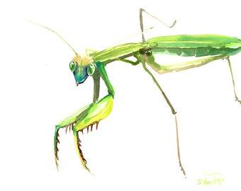 Praying Mantis, Original watercolor painting, 9 X 12 in, green animal art