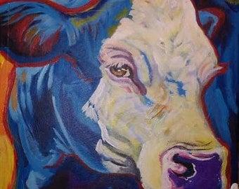 Angus bald face cow