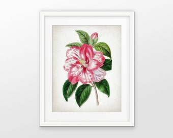 Pink Flower Art Print - Pink Flower Decor - Floral Decor - Botanical Print - Pink Wall Art - Single Print #2111 - INSTANT DOWNLOAD