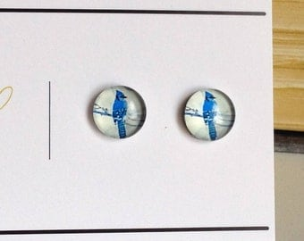 10 pcs Blue Jay Bird Cabochon 10mm Glass Dome Cabs