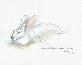 White Rabbit giant of Flanders - watercolor on the spot