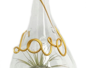 "Script Love Glass Terrarium with Living Air Plant - 3.5 x 3.5 x 6.5"" - Valentine"