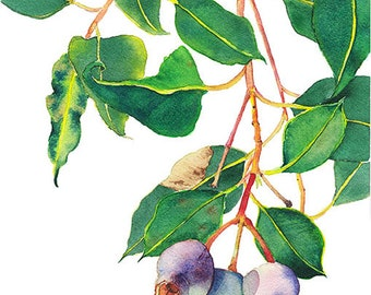Gum nuts botanical print A4 - Australian native eucalyptus - Gum tree branch watercolor nature print - purple & green home decor