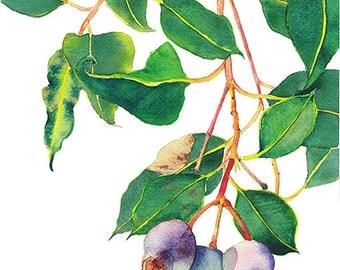 Gum nuts botanical print A4 - Australian native eucalyptus - Gum tree branch watercolor nature print - purple & green home decor