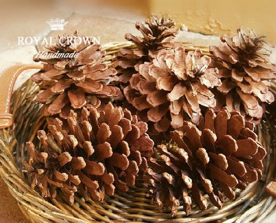 Pine cone decor pine cones natural pine cone natural for Large pine cones
