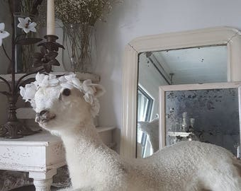Vintage white lamb preparation taxidermy shabby Brocante