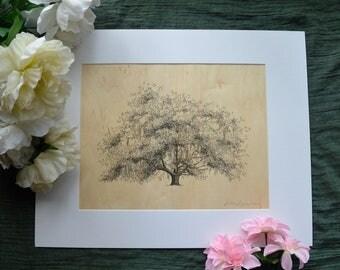 Oak Tree Drawing on Wood Veneer - Pen and Ink Art Print- Old Dairy Oak - 11x14 - Savannah, Georgia