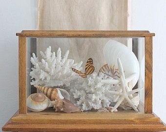 Vintage Wood And Glass Specimen Display Box