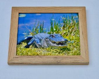 Alligator Print with White Oak Frame