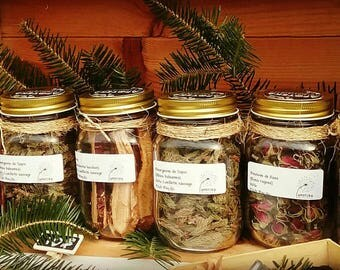 Fruits and buds Roses, Balsam fir buds, elderberry fruit, Reishi ~ Infusion the & decoction ~ herbs ~ médecinale herbs ~ Tea