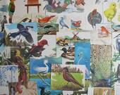 bird themed ephemera for junk journals, smash books, art journals, collage and altered art, bird themed ephemera