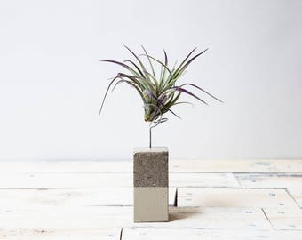 Large Airplant Concrete Planter /  Holder