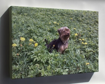 Canvas 16x24; Yorkshire Terrier P2