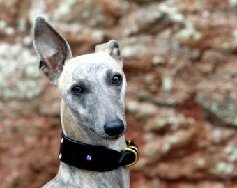"""The """"Bella"""" Whippet collar"""