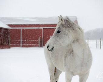White Horse Nature Photography, Horse Photo, Horse Picture,  Wall Art, Nature Photography,  Wall Art, Home Decor