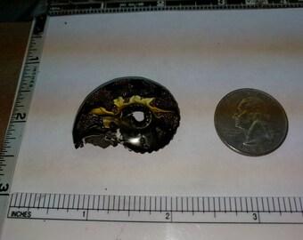 Pyritized ammonite fossil, 34.0x26.9mm baecp