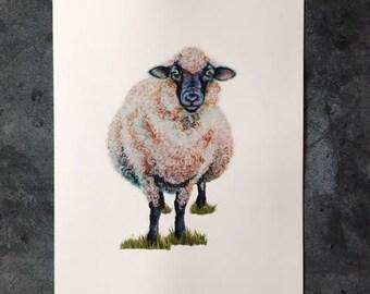 Elsa the Sheep - Art Print 11x14