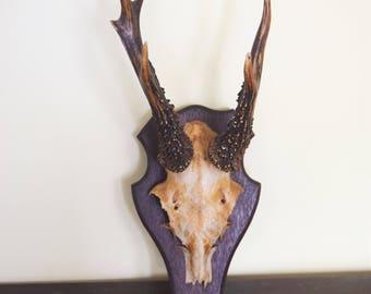 Vintage Roe Deer Mounted Antlers