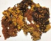 Hand-dyed WOOL NEPPS Australian Merino Fibre variegated colours (ochres/browns) - 20 grams