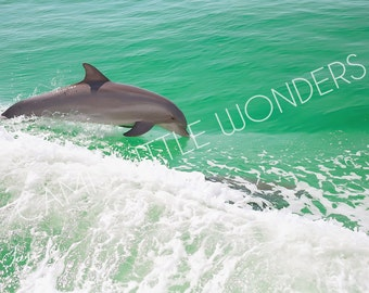 Dolphin Photograph Stock Image