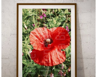 Poppy Wall Art, Poppy Print, Poppy Poster, Poppy Photography, Poppy Art, Poppy Art Print, Poppy Artwork, Poppy Decor, Poppy Home Decor