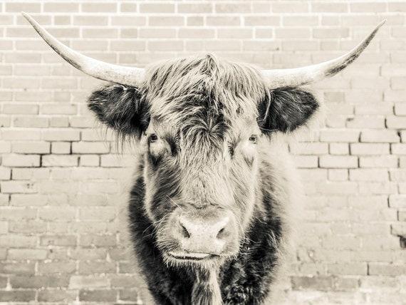 THE BULL 2. Bull Print, Black And White, Cow Print, Photographic Print, Animal Portrait.