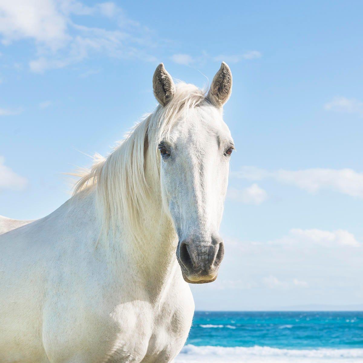 beach horses 3 spanish horse equine photography white horse