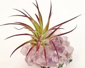 Amethyst Cluster with Air Plant , Boho  Mother's Day Gift ,  Purple Ionantha  Gemstone , Desk Accessory , Air Plant Garden  , Crystal Decor