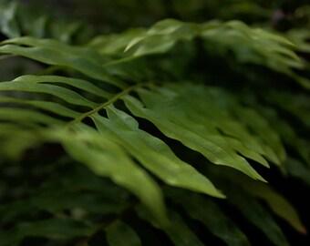 Macro Leaves Print