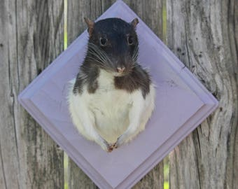 Black and White Taxidermy Rat on Lavender Plaque
