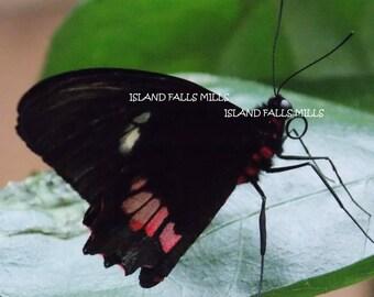 Butterfly on a leaf digital download