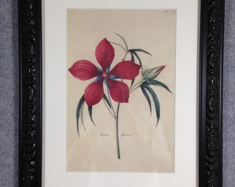 Framed print of Hibiscus Plant