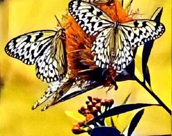 Yellow Butterflies Canvas Wall Art