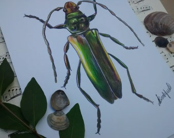 Original A4 Musk Beetle illustration wall art