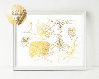 Neuron Art Neuroscience Art Gold Foil Print - Gift for Medical Student - Vintage Greys Anatomy Medical Illustration - Gift Neuroscientist