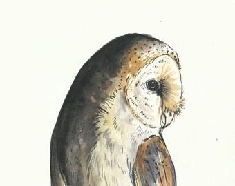 Greetings Card - Barn Owl