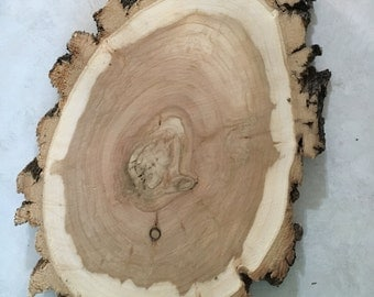 15 1/2 x 9 1/2 inch x 1 inch thick Willow Wood Slice