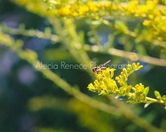 """Photo Print: """"Light as Air"""""""