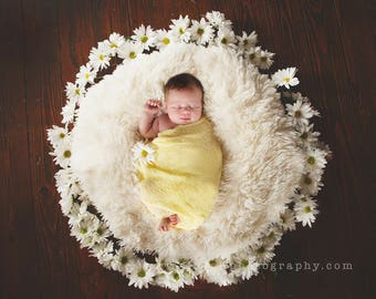 Newborn Digital Daisies Backdrop