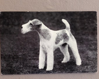 Vintage Wire Fox Terrier, Wire Haired Terrier Photographic British Postcard Unused
