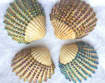 Decorated Shell Collection - Brights